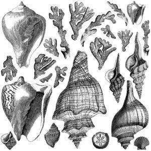 IOD - Seashore 30,5 x 30,5 cm pecsét