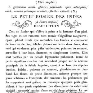IOD - LA PETIT ROSIER 28x36 cm bútortranszfer